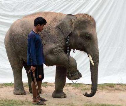 跟动物合照的背后其实是惨无人道