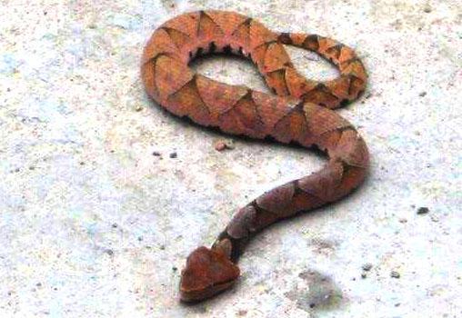 户外亚博体育app下载地址遇到蛇咋办?